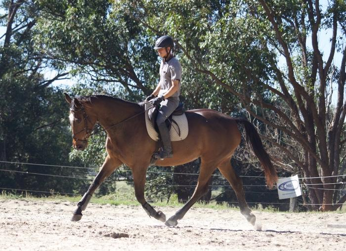 Talented Young Warmblood-Must go!!