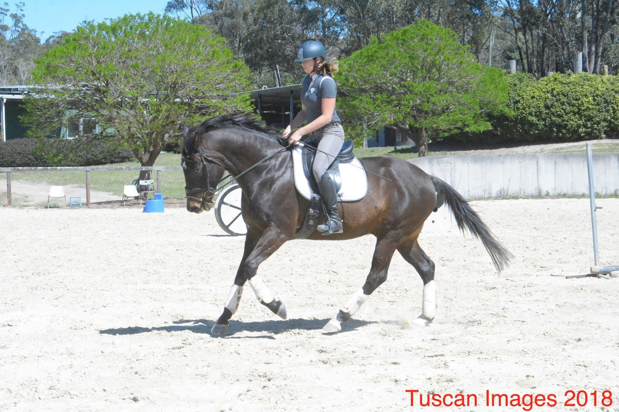 Loveable and Fun Gelding