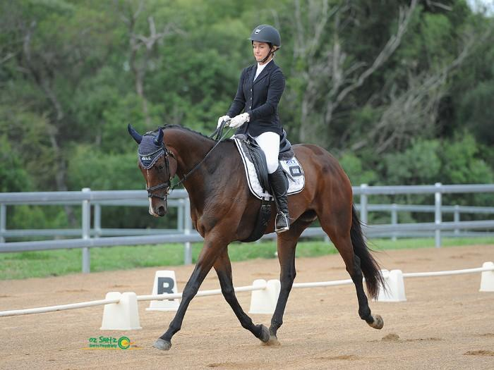 Elementary/Medium dressage gelding, 16.2hh, 11yo