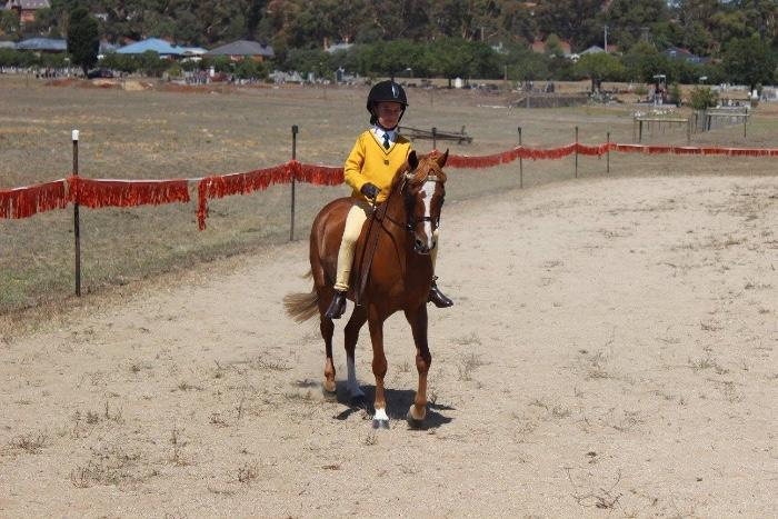 12.1hh 11yo Aust Pony gelding for sale