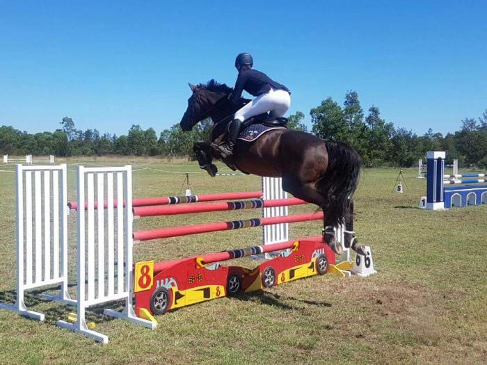 Talented Performance Mare