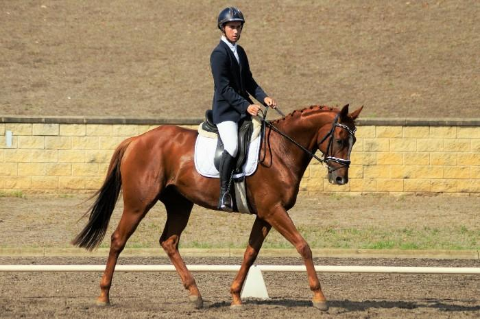 Straight Forward Eventer *PRICE REDUCED*