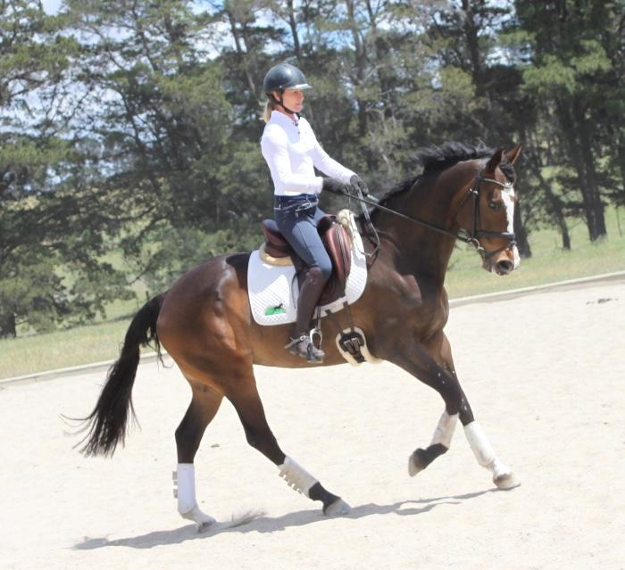 Elegant 6 year old performance mare