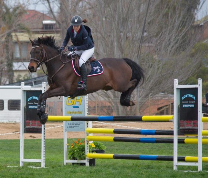 Talented Showjumping Mare