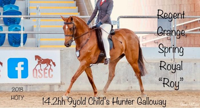 Stunning Child's Hunter Galloway