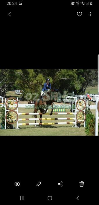 Super off the track thoroughbred. Terrific jumper