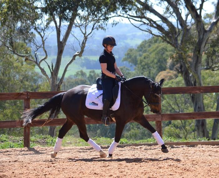 Stunning Young Dressage Horse