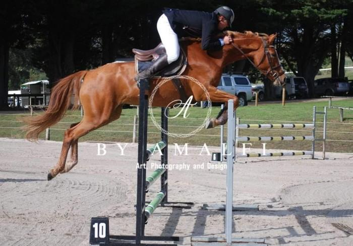 Beautiful Warmblood Mare *PRICE REDUCED*
