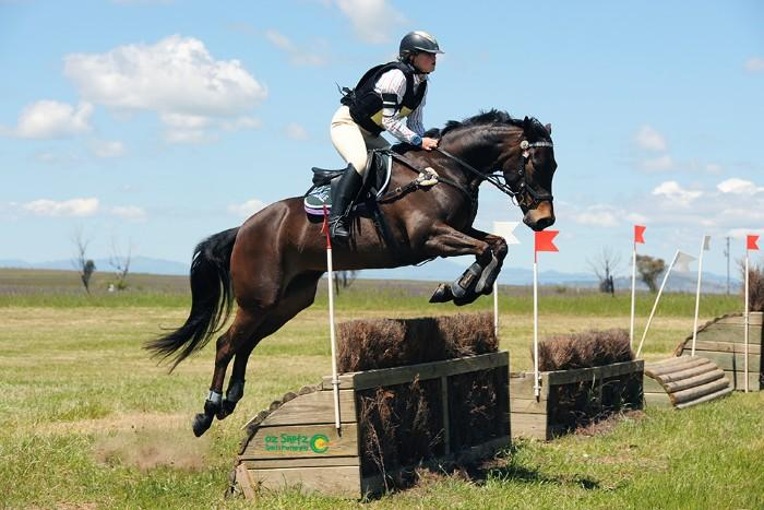 QUIET, KIND ALL ROUNDER REGISTERED ASH MARE