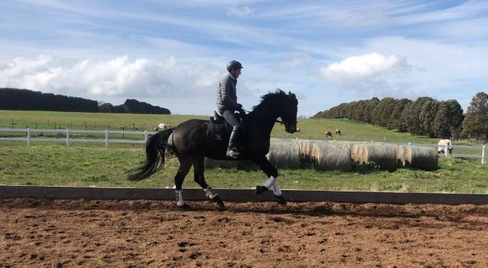 Experienced Pony Club Mount all rounder