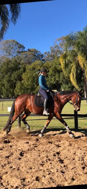 Quiet & Fun Heritage Stock Horse Gelding