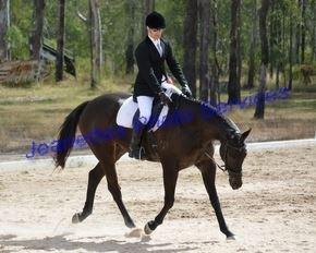 17.1h TB Gelding - Allrounder SJ, Eventing, Dress