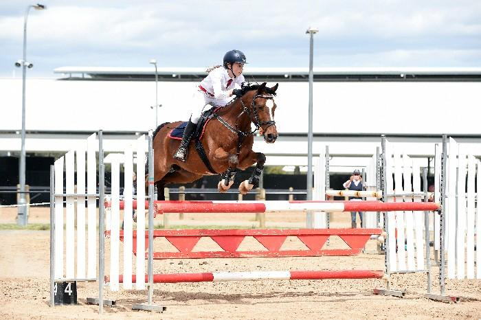 Grand Prix NZ Jumping Pony
