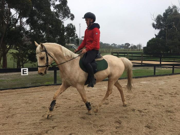 Fun Pony Club Allrounder