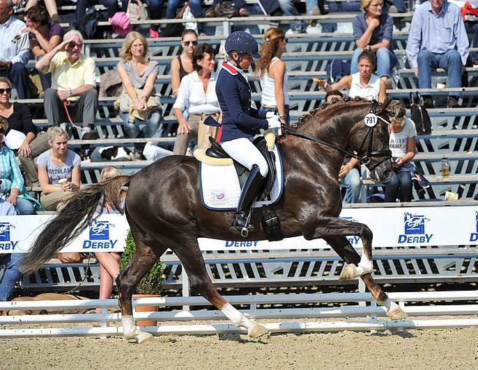 Elite All-Around Pony Gelding
