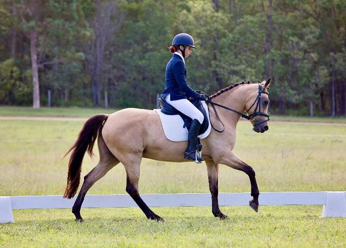 All Rounder Performance Pony