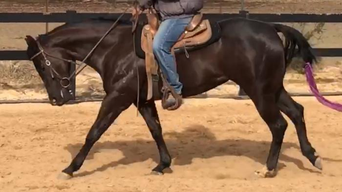 Black 3YO Quarter Horse Filly
