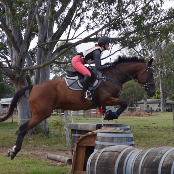 Safe, Honest Eventer/Showjumper