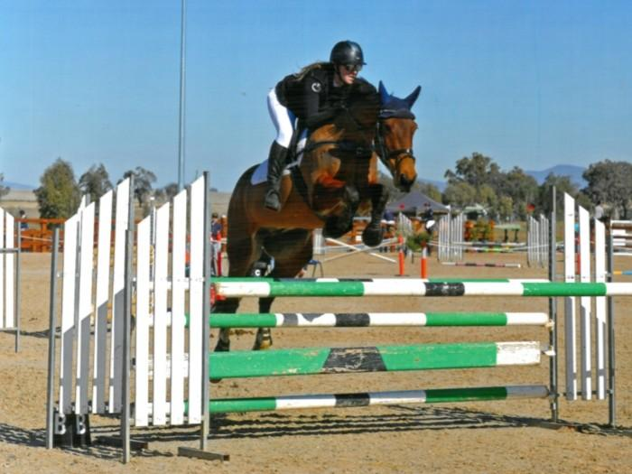 Incredibly Fun Perfomance Gelding