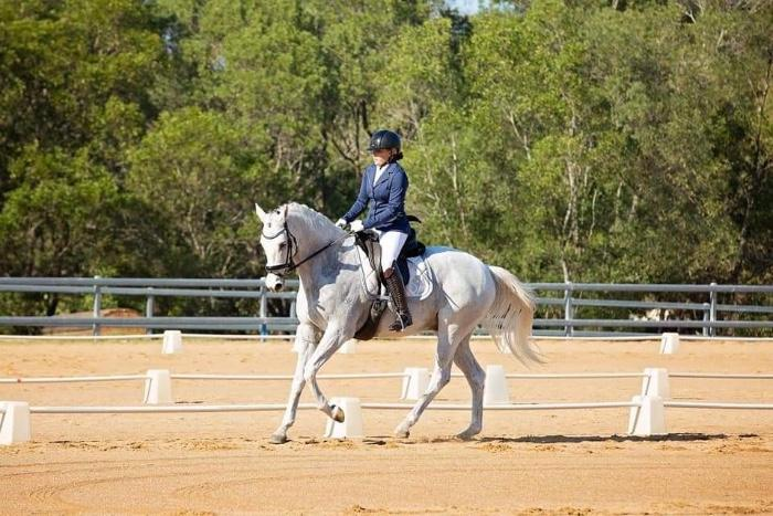 Quality Grey Gelding - priced for quick sale