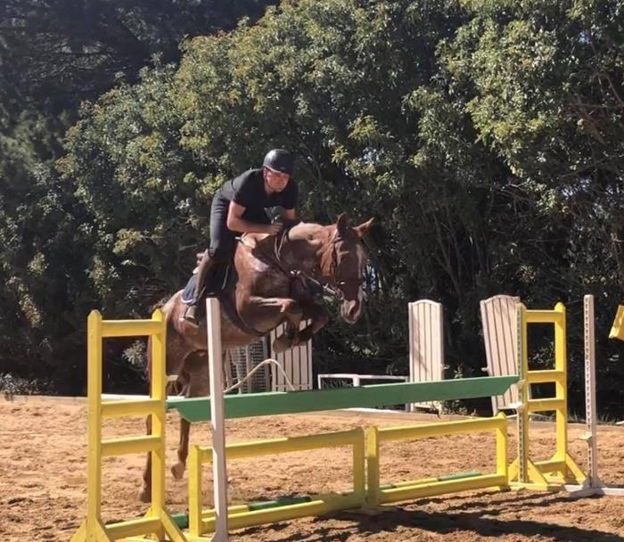 Appalossa warmblood with great potential