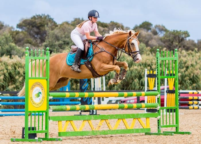 Competitive Showjumper Welsh Cob X