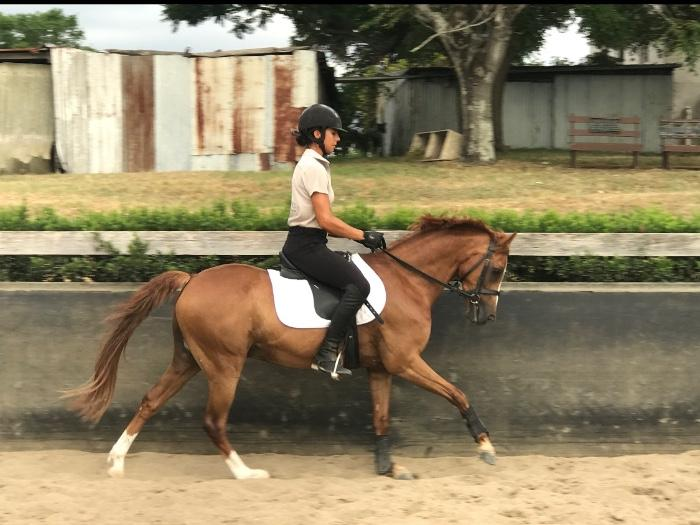 Eye-catching dressage/show pony with pazazz!