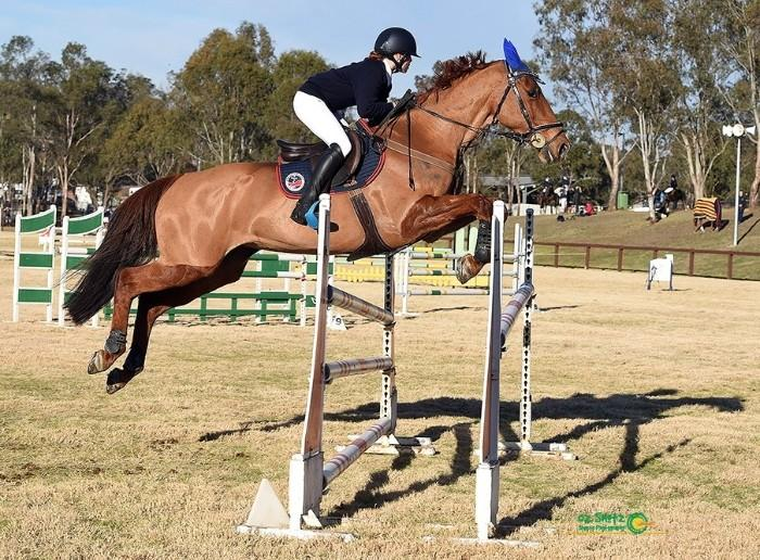 Competitive Showjumping Schoolmaster