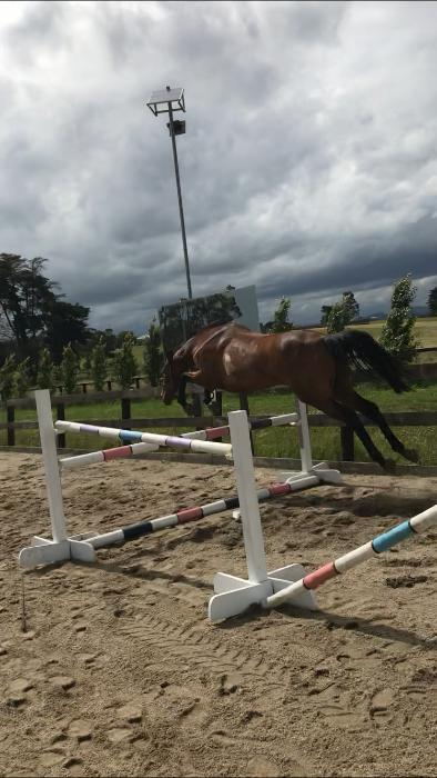 Your next superstar eventer!