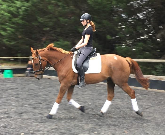 AASTARON – a super young dressage horse with hug