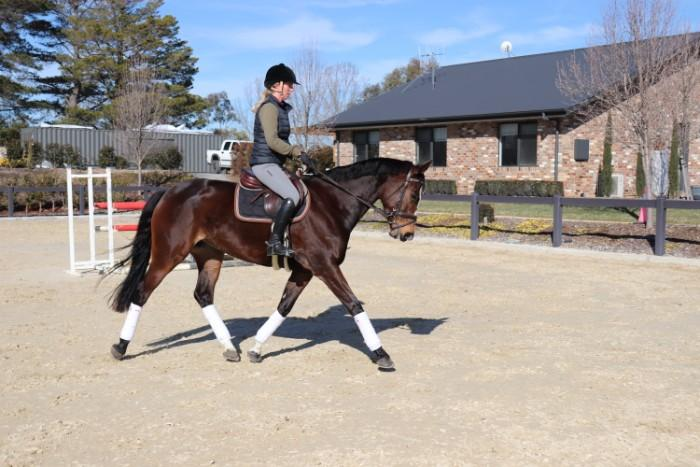 Talented 6yo mare - Future Star