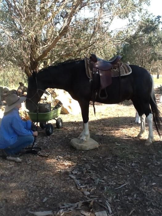 Horsezone - Buy, show, sell horses and equestrian related products