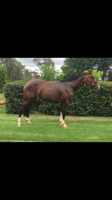 Stunning 3yo Contenda Filly Future Star