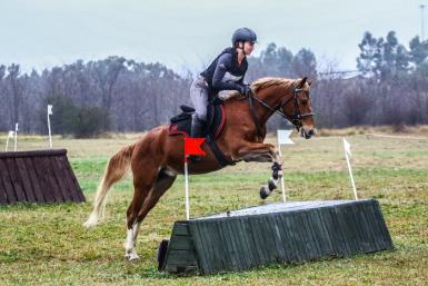 Equestriad Hunter Trials 2020