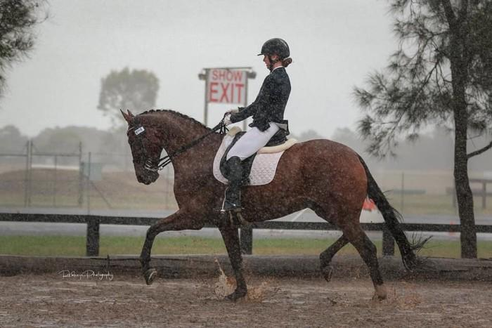Advanced dressage gelding