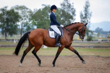 WG Confederate - highest scoring trot in the YH dressage championships at Sydney CDI 2 years in a