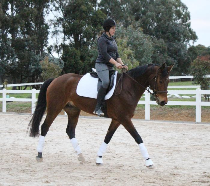 Regal Salute x Cruising Warmblood
