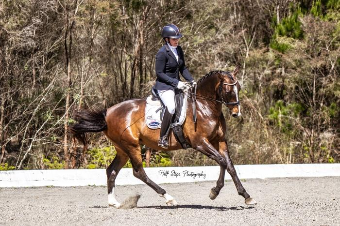 5yo Warmblood Dressage Mare