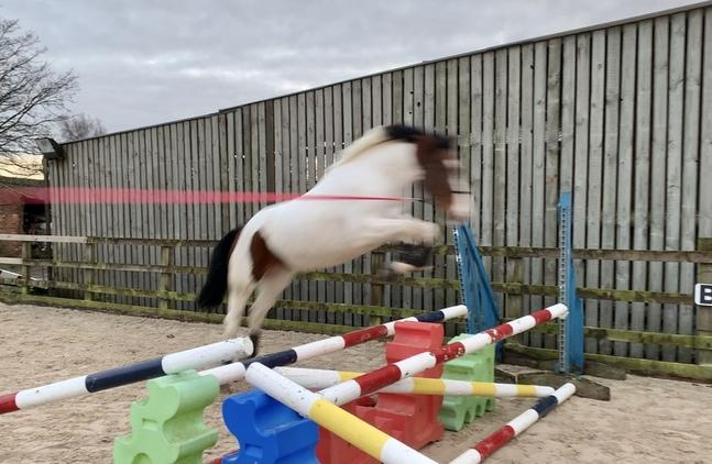 Stunning ISH - 15.3hh/16hh Bold & Scopey Coloured