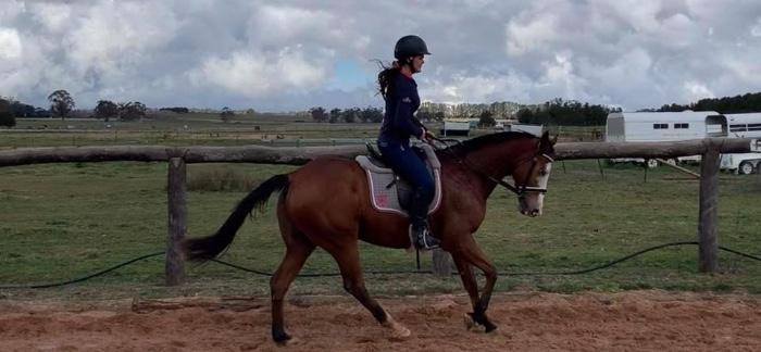 Coloured TB Gelding