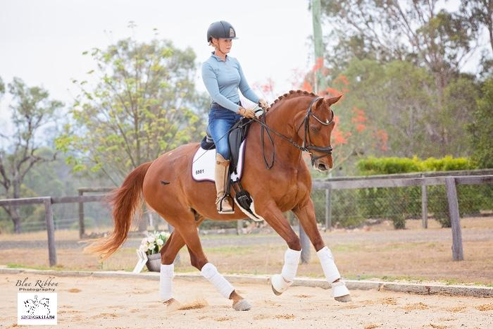 Super Elem/Medium gelding