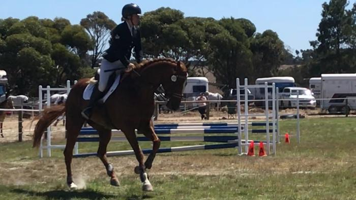 10yo Chestnut OTT Thoroughbred -Price reduced