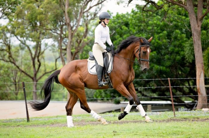 4yo Warmblood Gelding