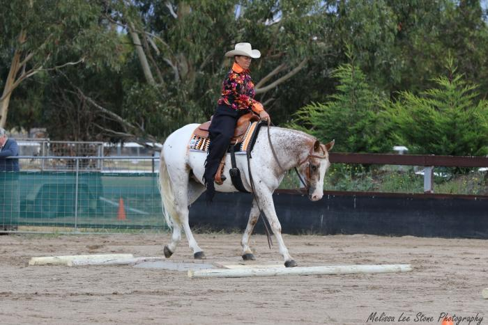 Competitive Appaloosa Gelding