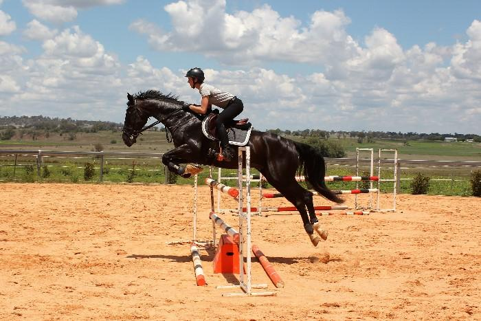 Stunning Athlete - Jump/Eventing/Show