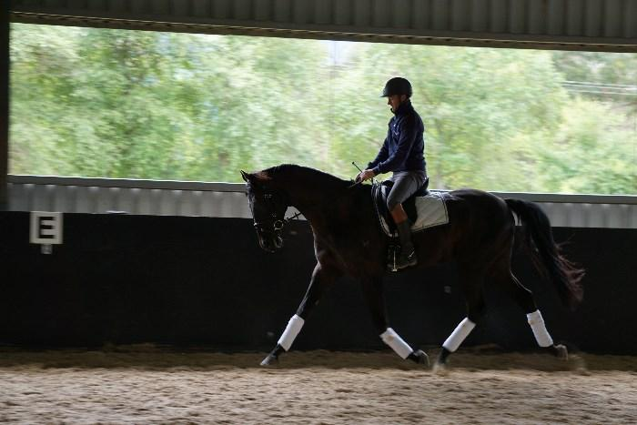 Quiet, Pretty and Fancy Dressage Horse