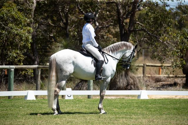 Spanish / Andalusian Horses For Sale - Spanish / Andalusian