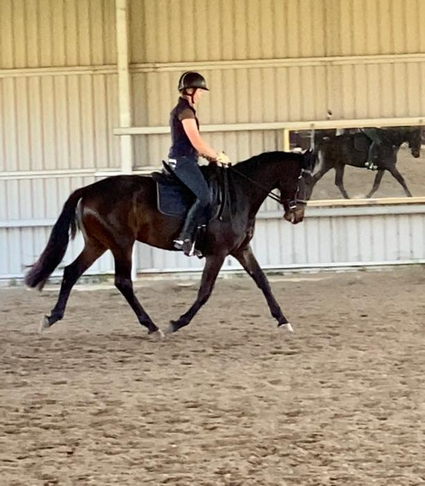 Amazing dressage mare ready for young horse classe