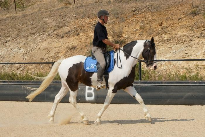 Eye Catching Dressage Prospect