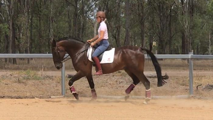 Handsome Dressage Gelding